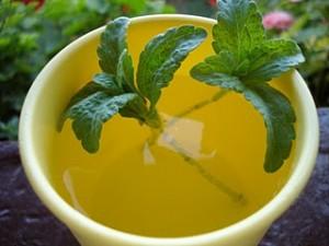 Fraîche ou en pastilles la stevia est une bonne alternative au sucre