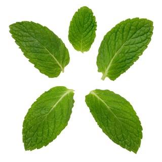 los edulcorantes de stevia, planta sudamericana para endulzar bebidas