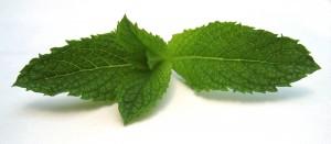 Dès le 02 décembre, c'est la famille entière des glycosides de stéviol extraits de Stevia qui pourra être utilisée au niveau européen